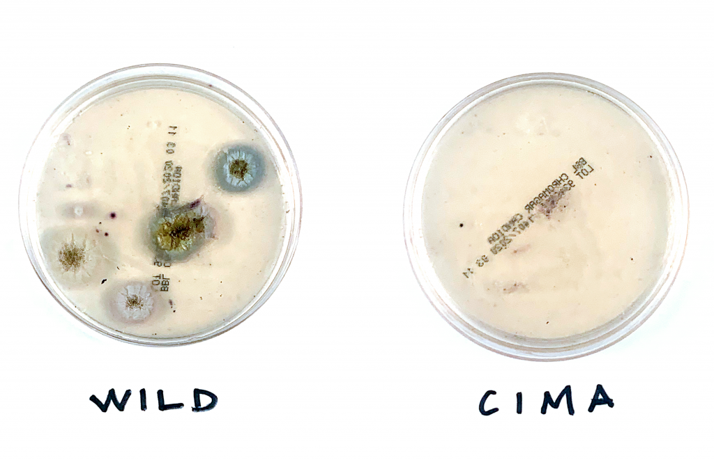 WILD and CIMA plates side-by-side
